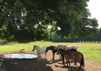 Pferde Pinnow